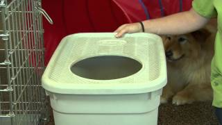 How To Get A Dog Not To Eat Kitty Litter : Dog Training