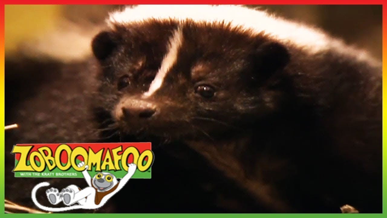 zoboomafoo meet stinky full episode animal shows for kids tv
