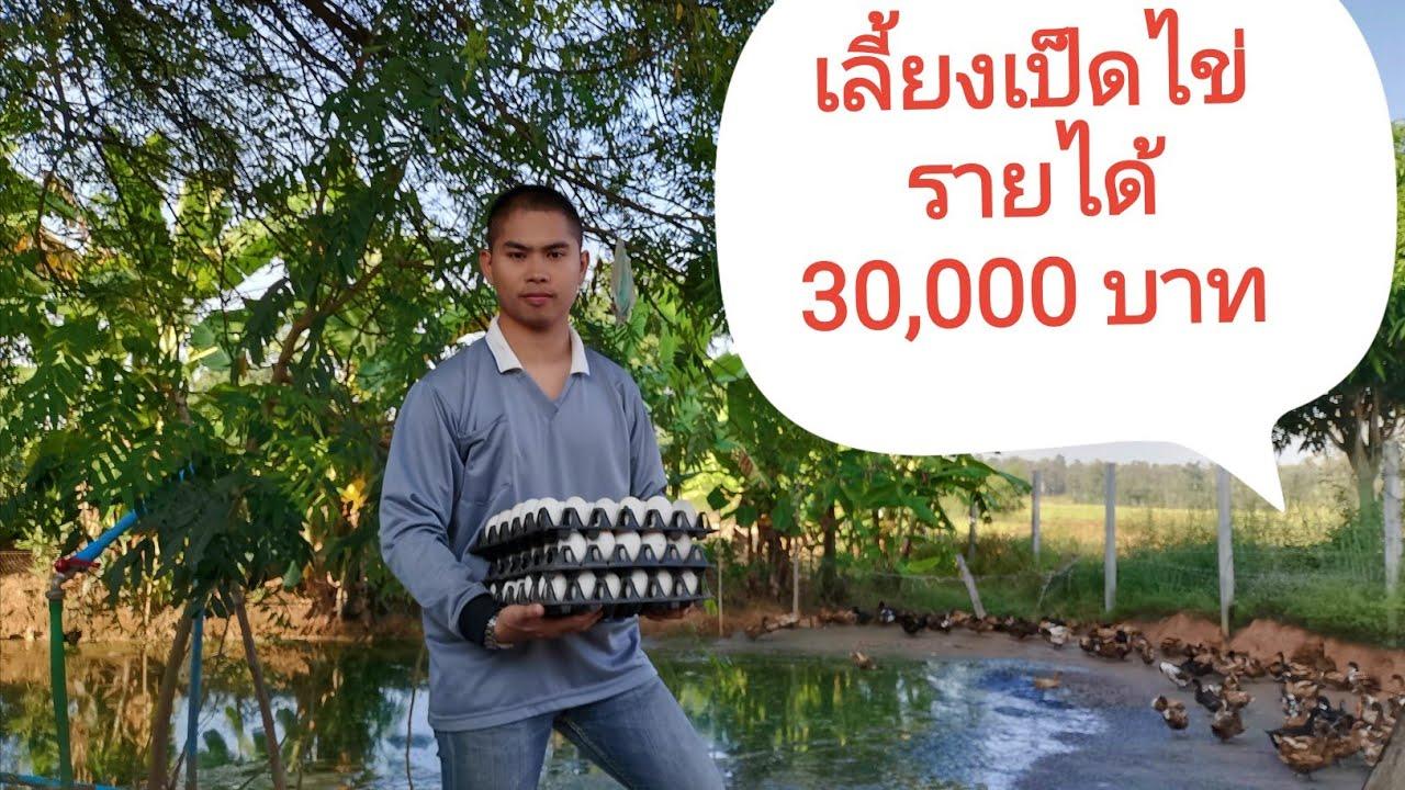 แชร์ประสบการณ์เลี้ยงเป็ดไข่รายได้ 30,000 บาทต่อเดือน หักแล้วเหลือกี่บาท????