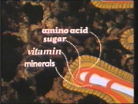 video-enciclopedia-americana-el-cuerpo-humano-el-aparato-digestivo
