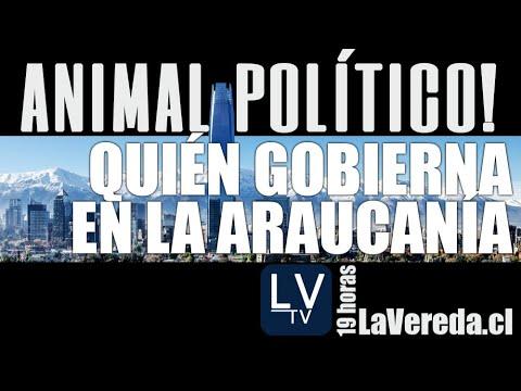 Quién gobierna La Araucanía - en Animal Político