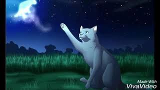 Самые красивые картинки котов воителей