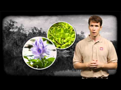 "USACE ""Invasive Species"" Educational Video (Clip)"