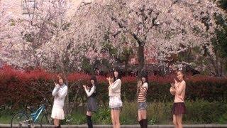 桜が散りはじめた東京でデビュー曲の「桜チラリ」をメンバー全員で踊り...