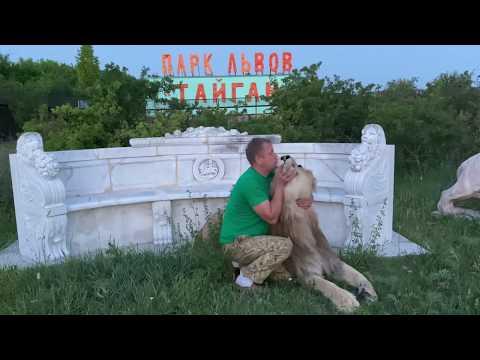Султан , МЫ БУДЕМ С ТОБОЙ ВОЖАКАМИ ! Человек успокаивает льва ! Russian Lion man !