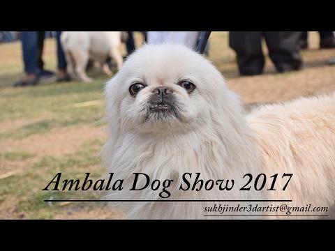 Ambala Dog Show 2017