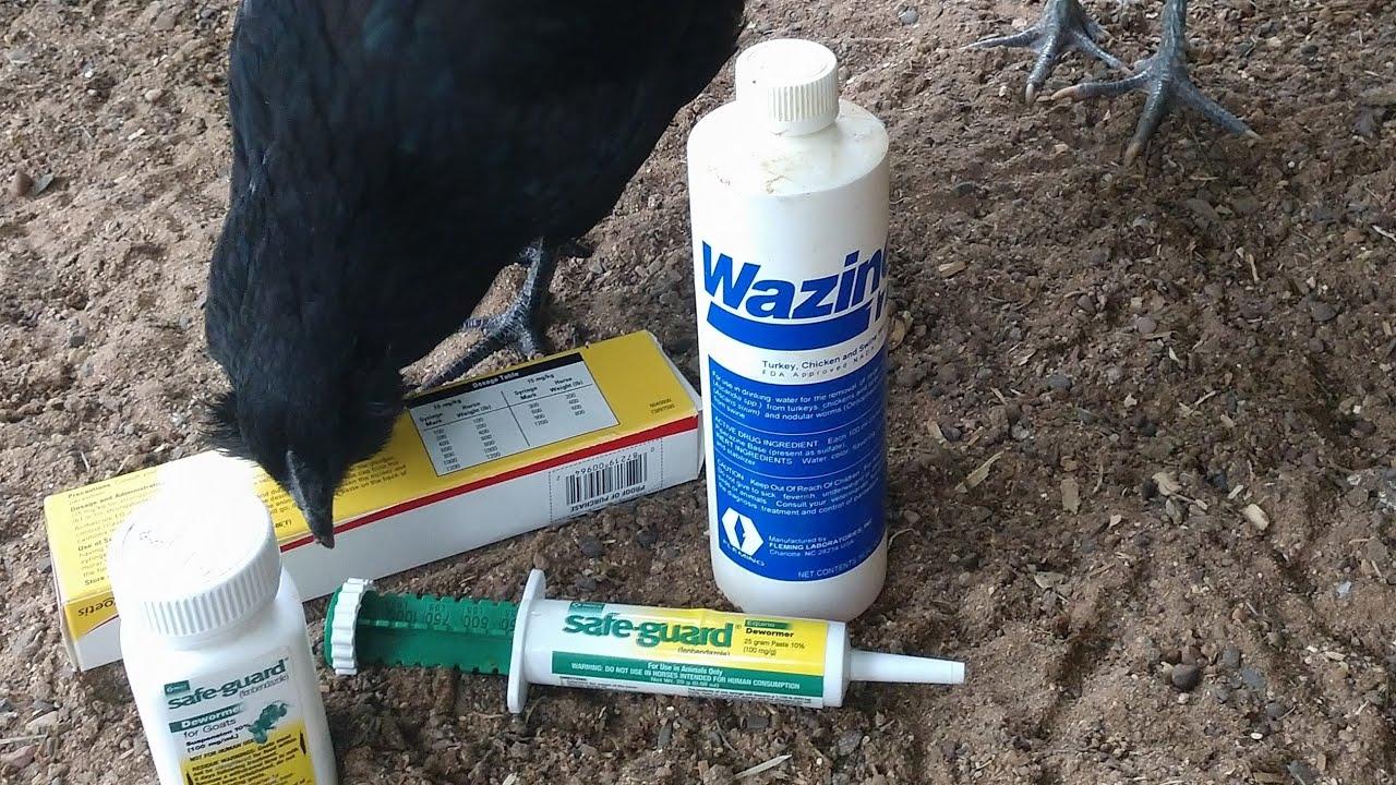 deworm a chicken