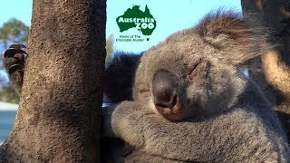 The Australia Zoo Walk About   Sunshine Coast Tour