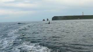 Поехали на рыбалку, а там касатки ! Когда рядом киты, уже не до рыбалки.