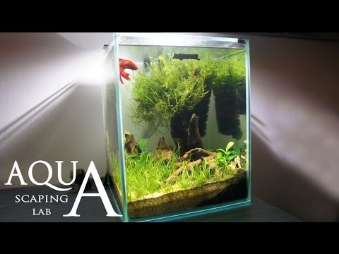 Aquascaping Lab - Tutorial Nano Cube Aquarium (size 20 x 20 x 25H 10L) Grass and wood style