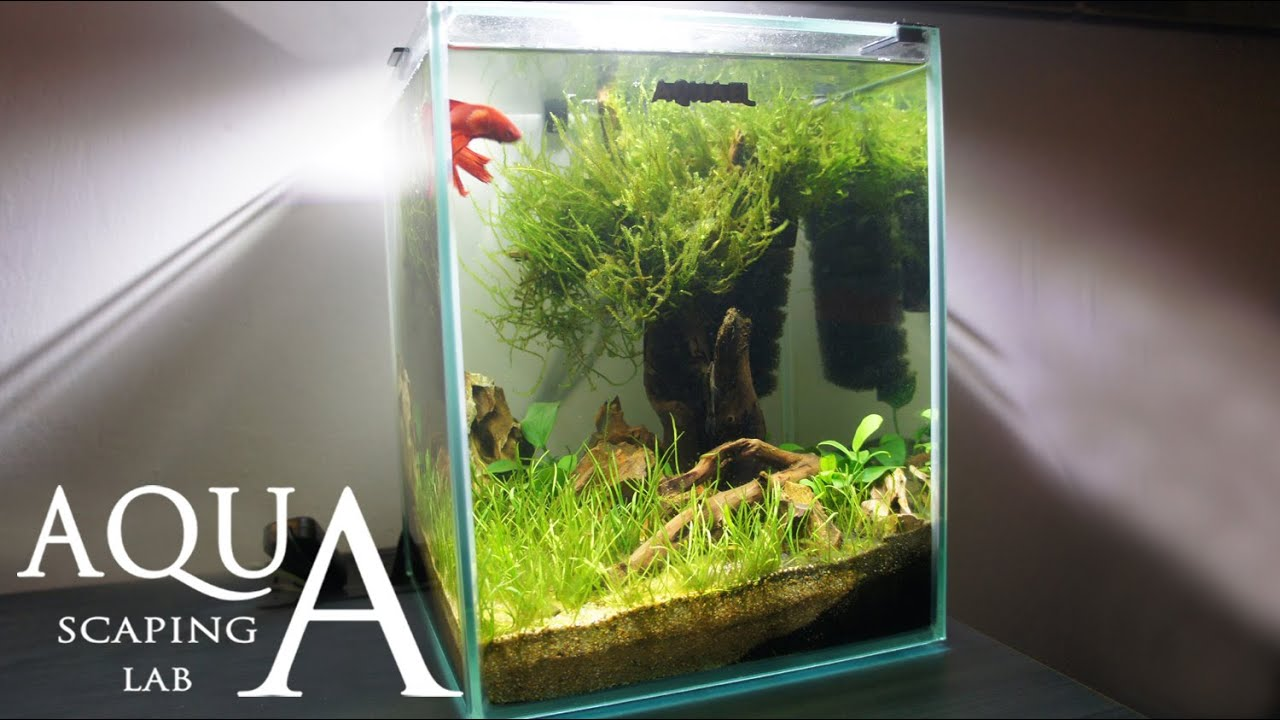 Aquascaping Lab Tutorial Nano Cube Aquarium Size  X H L Grass And Wood Style Youtube