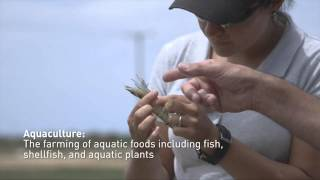 Aquaculture | James Cook University