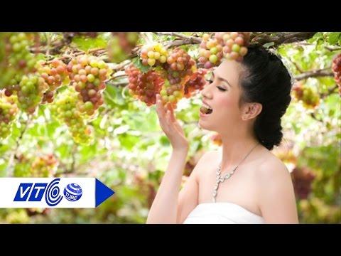 Đầu Thu khám phá vườn nho Ninh Thuận | VTC
