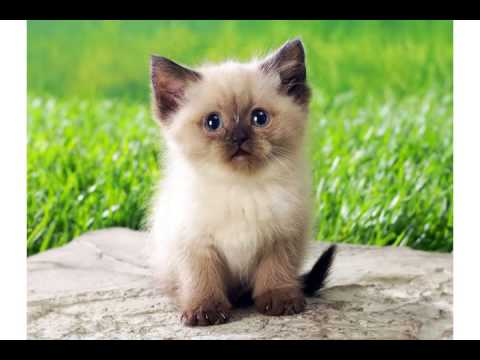 Super Cute Little Kitty Cat Wishes You A FUNNY GREAT Happy Birthday