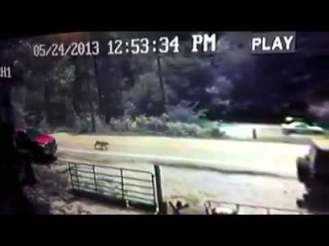 Possible Cougar or Mountain Lion in Totz, Harlan County KY