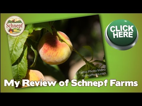 Schnepf Farms Review in Queen Creek AZ | My reviews from Schnepf Farms