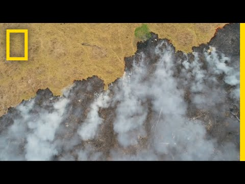 Amazon Fires 'So Much Worse Than Before' | National Geographic