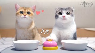 cat and bell for food