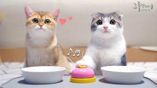 귀여운 먼치킨 고양이가 벨도 잘 쳐요 (귀염터짐)