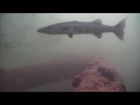Sharks in the Atlantic Cam 05-27-2017 15:00:10 - 15:28:05
