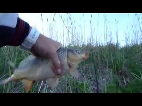 ловля карася в озерах глубины