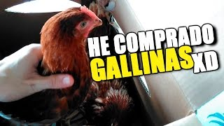 HE COMPRADO GALLINAS XD | ZarpasSucias Y PeloOveja QUE GATOS MÁS GRACIOSOS