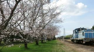 2017年4月6日 京葉臨海鉄道 北袖分岐と桜