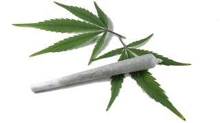 Still No Such Thing as Fatal Marijuana Overdose