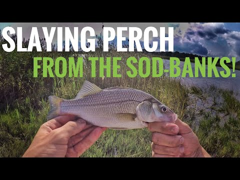 SLAYING White Perch On The NJ Sod-banks