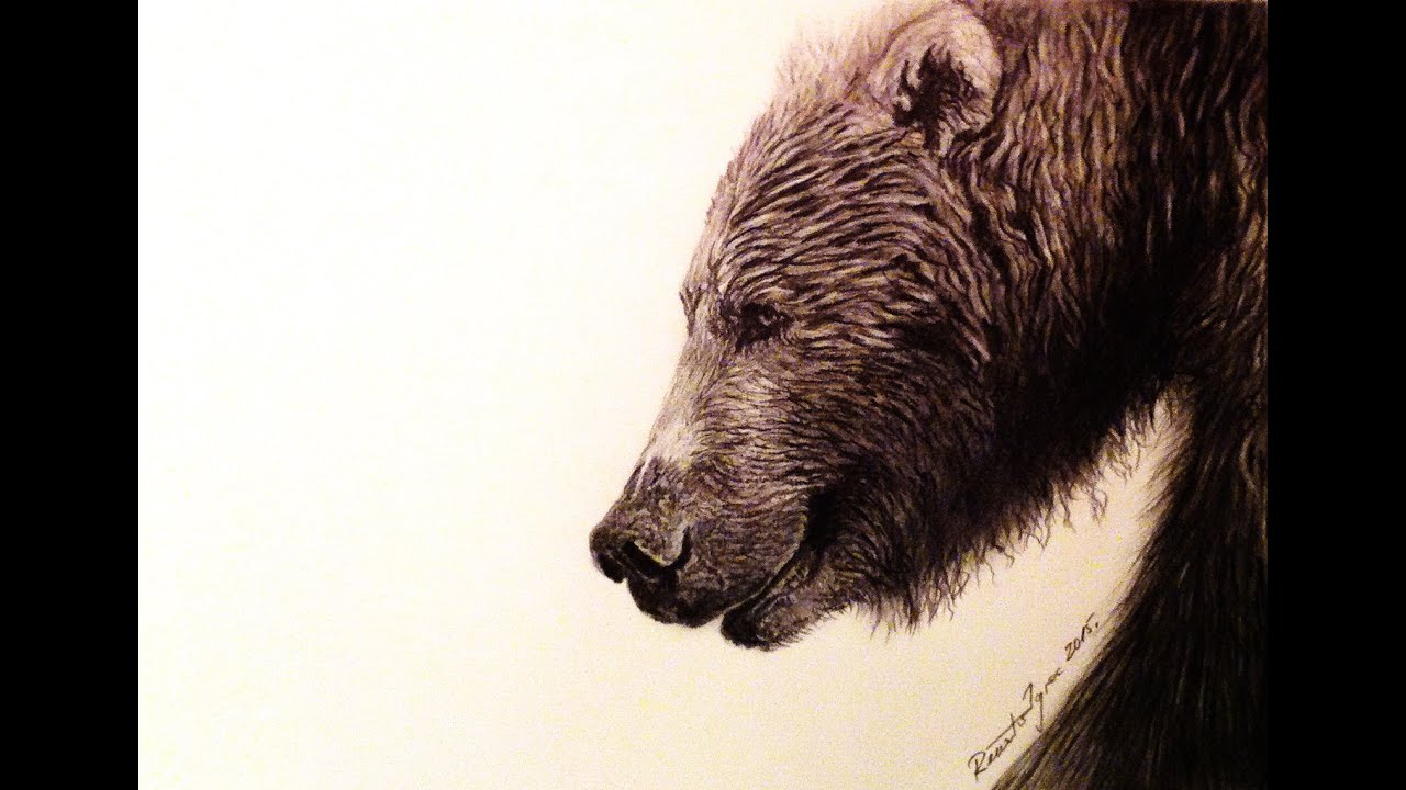 The grizzly bear pencil drawing