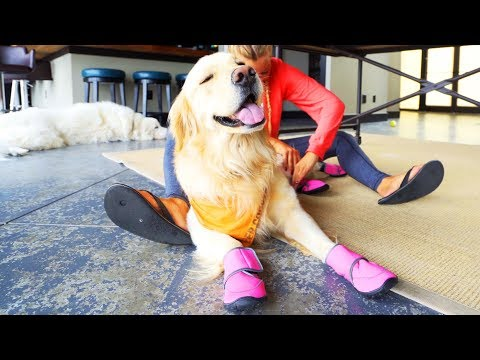 DOG LOVES HIS NEW SHOES (Super Cooper Sunday #130 Extended)