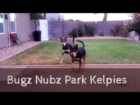 Bugz Nubz Park Kelpies