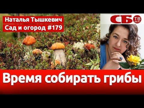 Когда начинается грибной сезон | идеальная погода для грибов