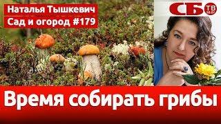 Когда начинается грибной сезон   идеальная погода для грибов