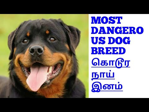 most dangerous dog breed in Rottweiler tamil