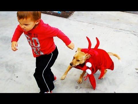 LOBSTER PUPPY ATTACKS KID! - YouTube Lobster Kid
