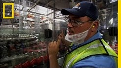 Bottling Bacardi | Ulitmate Factories