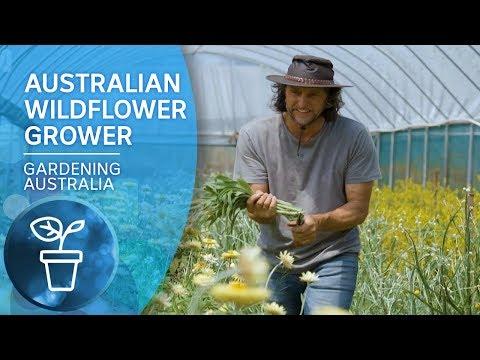 My Garden Path: Growing Australian Wildflowers