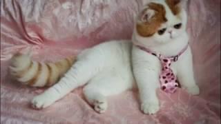Снупи/Самый милый котик в мире
