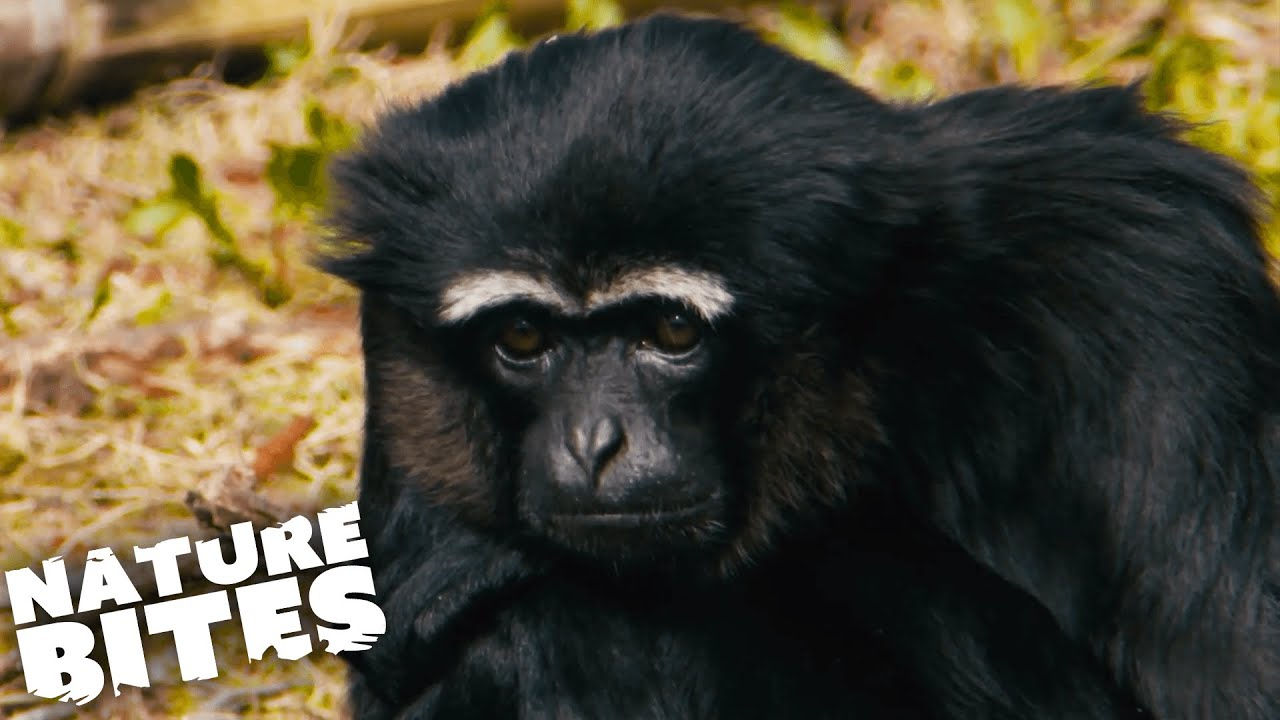 Download Baby Monkeys, Lion Cubs & More: Best Of Baby Animals!   Nature Bites