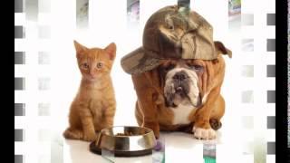 корм для собак фаворит(, 2014-10-20T16:35:33.000Z)