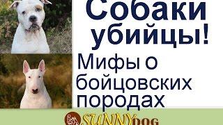 Собаки убийцы  Миф или правда  Стафорд, бультерьер и другие   собаки убийцы