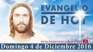 Evangelio de Hoy Domingo 4 de Diciembre 2016 ¡Camada de víboras!