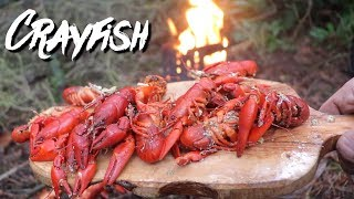 HAND DIVED Crayfish in The Woods | Bushcraft Catch & Cook