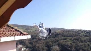 Yeni bir çift kuş aldım