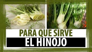 PARA QUE SIRVE EL HINOJO |  BENEFICIOS DEL HINOJO