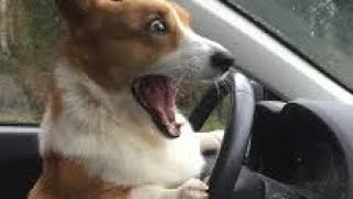 Trust me, you will laugh your ASS OFF  - The BEST dog compilation 2017 thumbnail