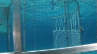 Video Tiger Beach Shark Cage Dive Adventures (West End, Grand Bahamas) download MP3, 3GP, MP4, WEBM, AVI, FLV Agustus 2018