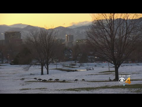 BEARDO - Geese Culling to continue in Denver
