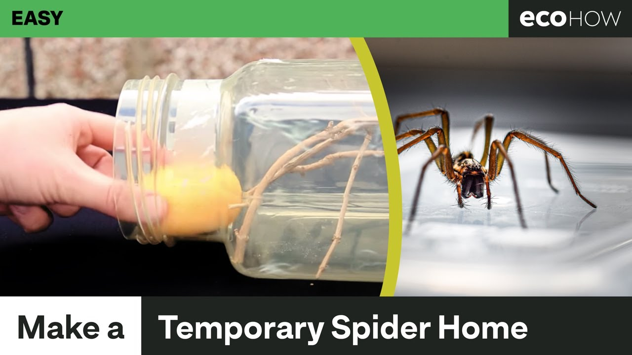 How to make a temporary spider enclosure